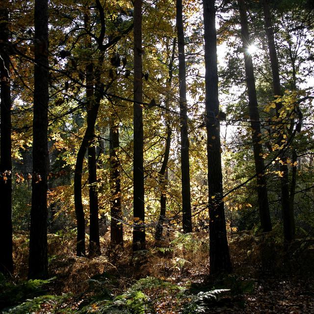 """""""Woodland scene"""" stock image"""