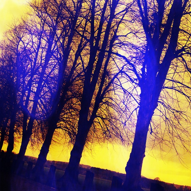 """Sunset Trees"" stock image"