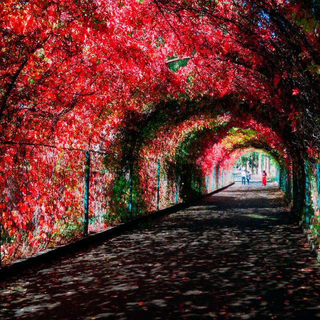 """Botanical garden"" stock image"