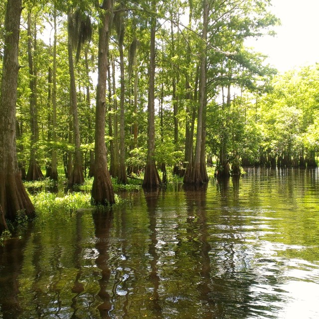 """""""Tranquil Swamp"""" stock image"""