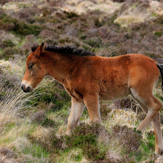 """""""Wild Foal"""" stock image"""