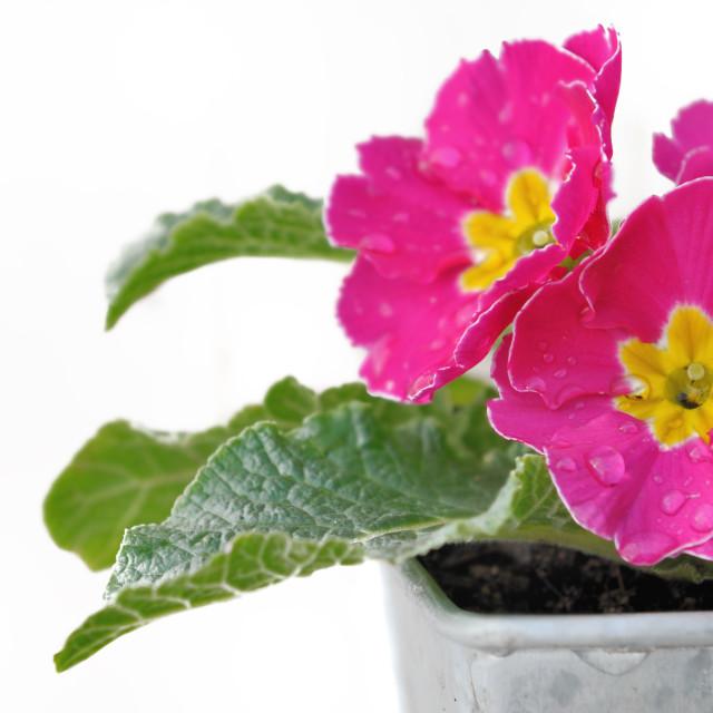 """floral freshness"" stock image"