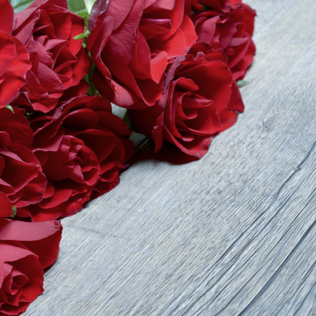 """""""Border of Roses"""" stock image"""