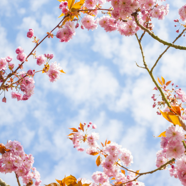 """Pink Flower in a branch"" stock image"