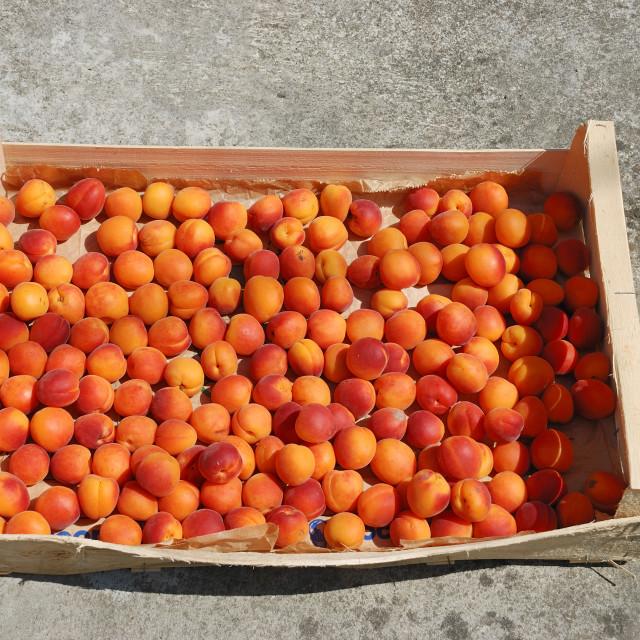 """Many apricot"" stock image"