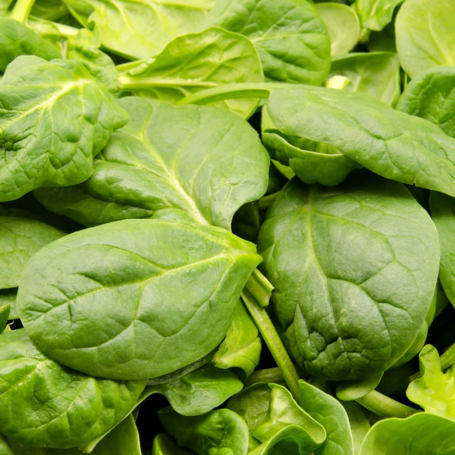 """""""spinach leaves"""" stock image"""