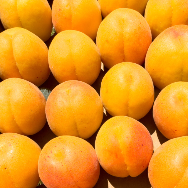 """Apricots sitting in a box"" stock image"