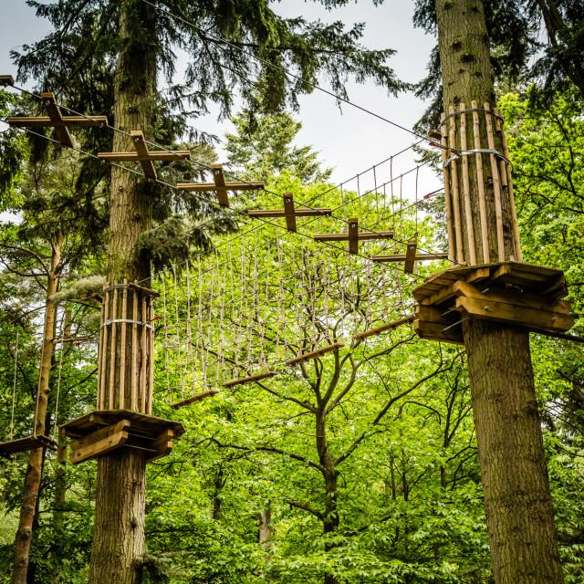 """""""Treetop bridge"""" stock image"""