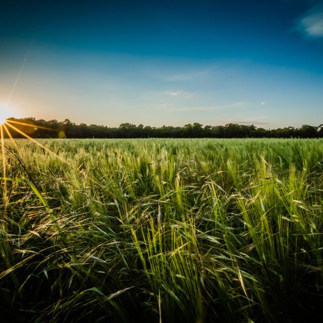 """Sunlit Field"" stock image"