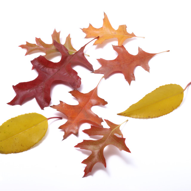 """""""Leaves on a white background"""" stock image"""