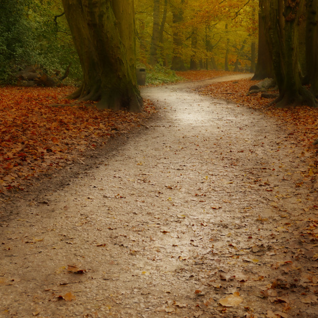 """The Autumn path"" stock image"