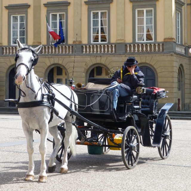 """""""White Horse and Carriage"""" stock image"""