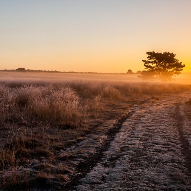 """""""Freezing sunrise"""" stock image"""