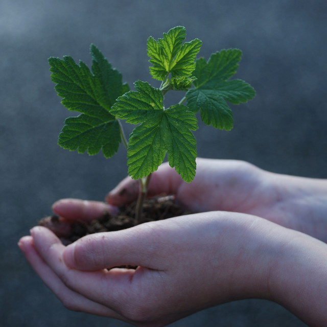 """""""A sprout on a hand"""" stock image"""