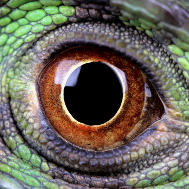 """""""water dragon eye"""" stock image"""