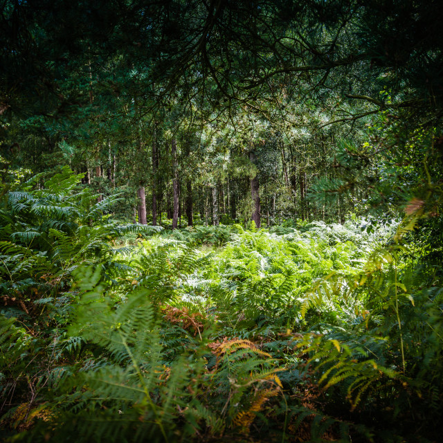 """""""Forest Window"""" stock image"""