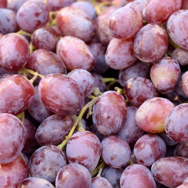 """ripe grapes"" stock image"