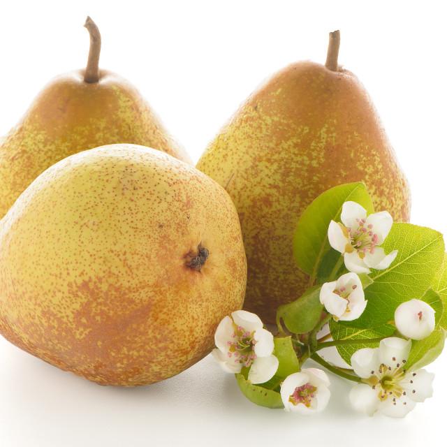 """Three ripe pears"" stock image"