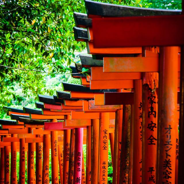 """""""Torii in shinto shrine, Tokyo"""" stock image"""