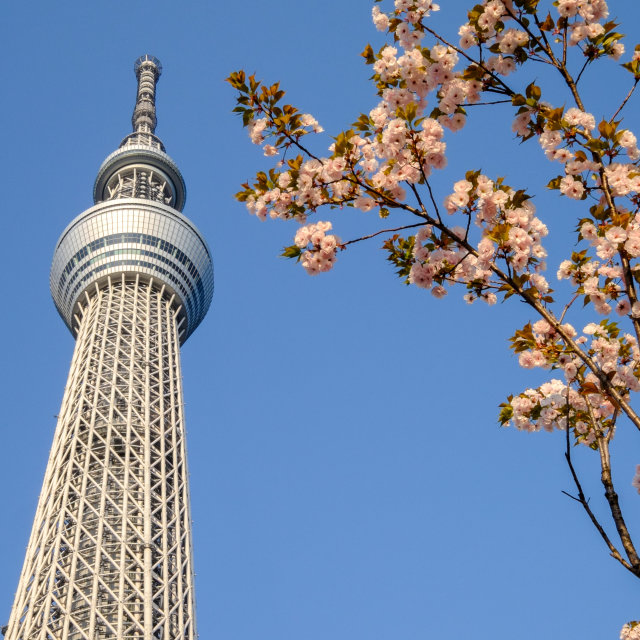 """""""TOKYO - CIRCA MAY 2014: Tokyo Sky Tree. The 2nd tallest building of the world and tallest of Japan (634m). On circa April 2014 in Sumida, Tokyo, Japan."""" stock image"""