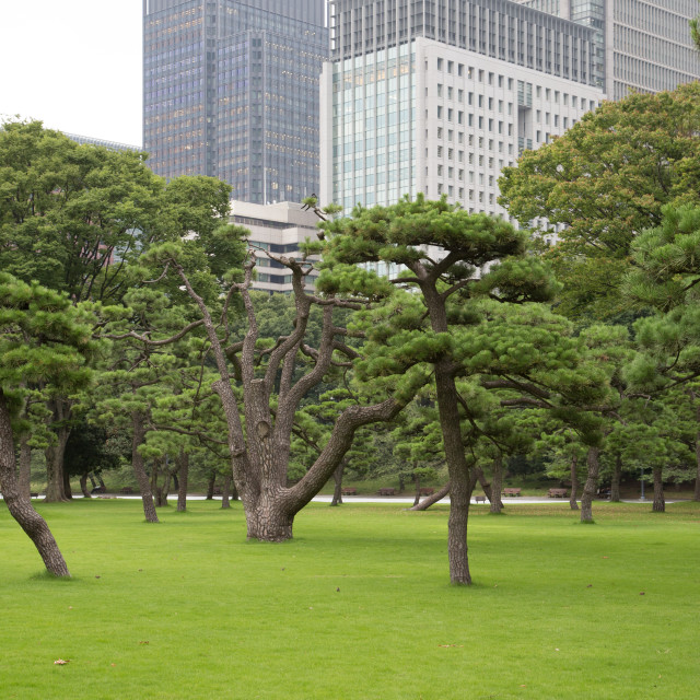 """""""Public park in Japan near imperial palace"""" stock image"""