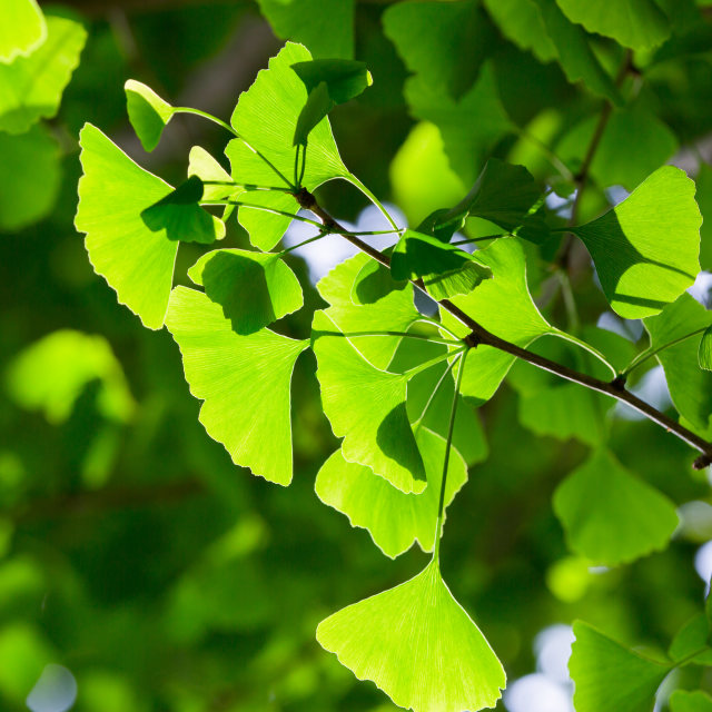 """""""Vibrant green leaf background, shallow focus"""" stock image"""