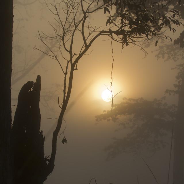 """Misty sunrise in Nepali jungle"" stock image"