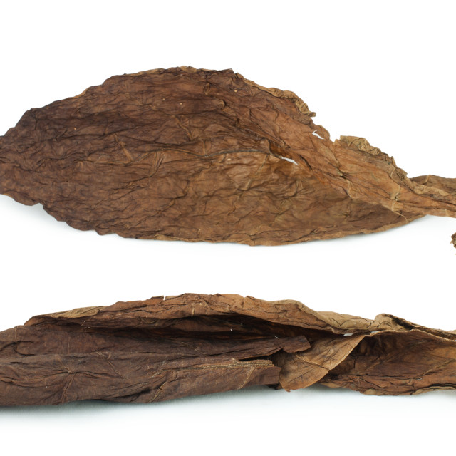 """""""Dried tobacco leaves"""" stock image"""