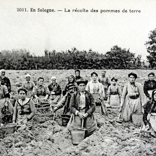 """old postcard In Sologne, harvesting potatoes"" stock image"