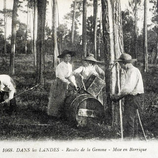 """""""old postcard In the Landes, harvest gem, barreling"""" stock image"""
