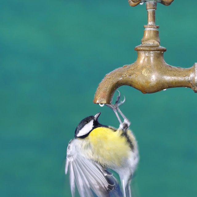 """Thirsty."" stock image"