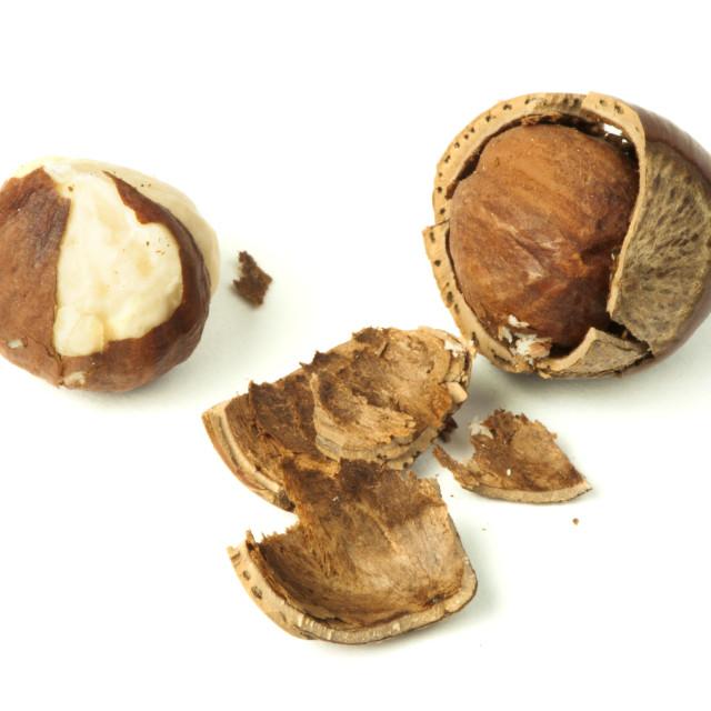"""""""Closeup raw hazelnuts white isolated"""" stock image"""
