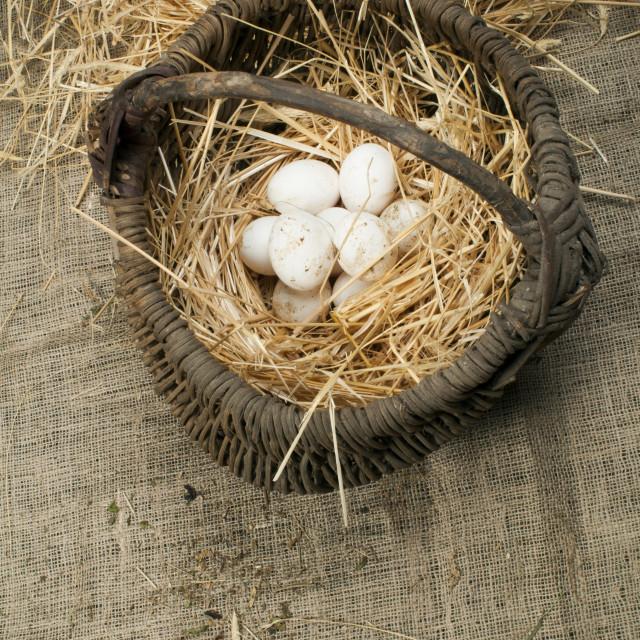 """Organic white domestic eggs in vintage basket"" stock image"