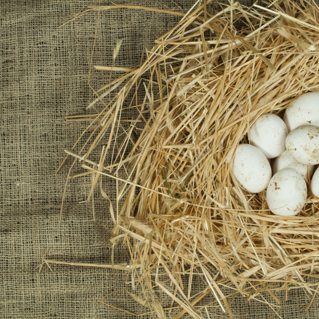 """Organic domestic white eggs in straw nest"" stock image"
