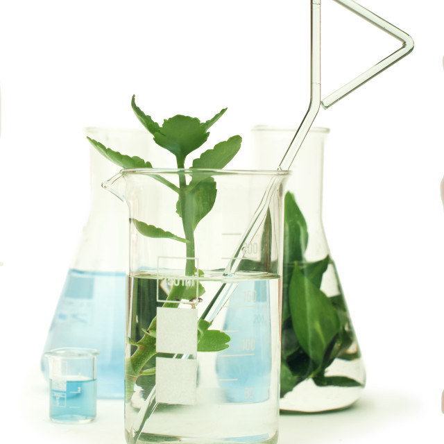 """Green plants in laboratory equipment"" stock image"