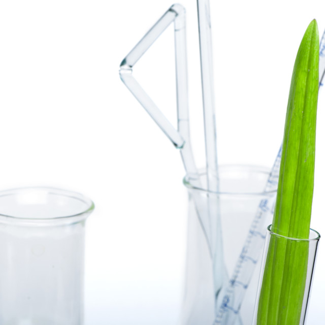 """Green plants in laboratory equipment"" stock image"