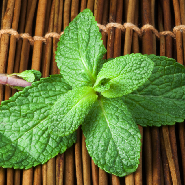 """""""Mint leaves on wooden base"""" stock image"""