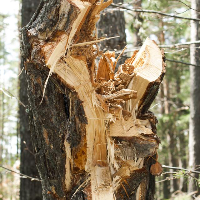 """""""Deforestation"""" stock image"""