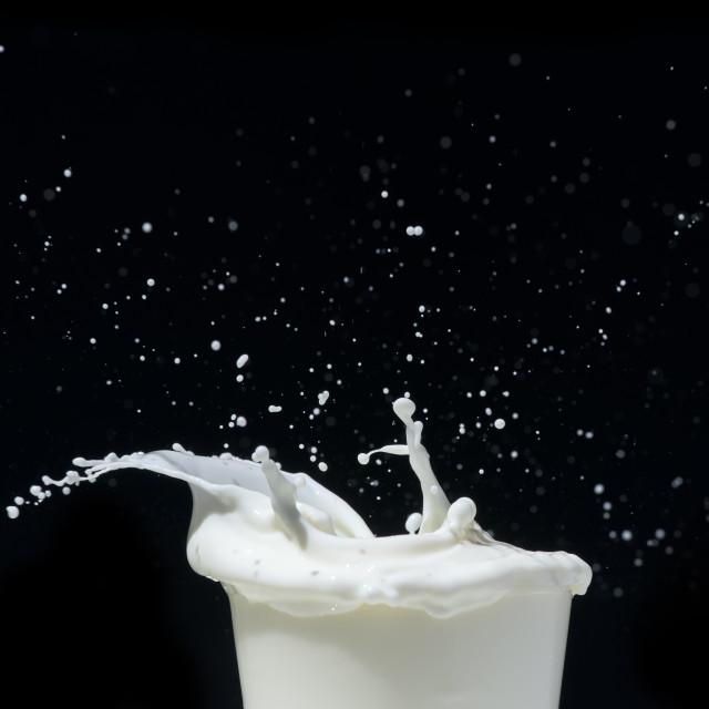 """""""Splashing milk on black background"""" stock image"""