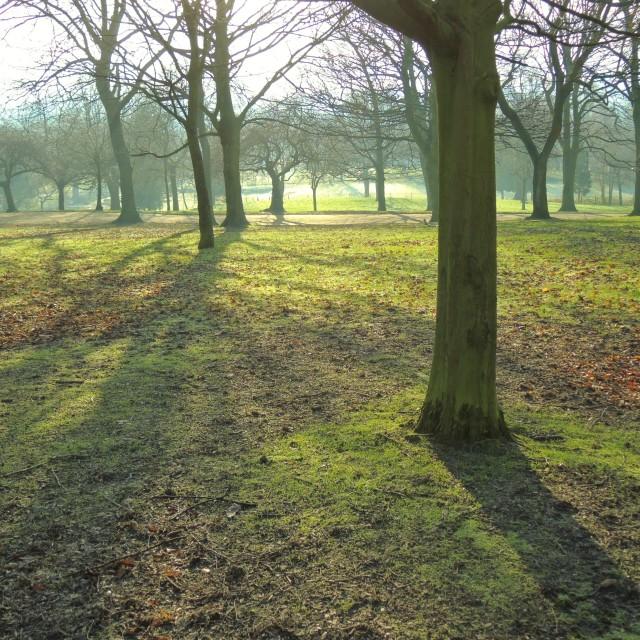 """""""A City Park Landscape."""" stock image"""