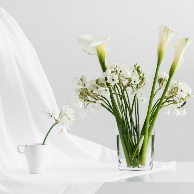 """white flowers on white background"" stock image"