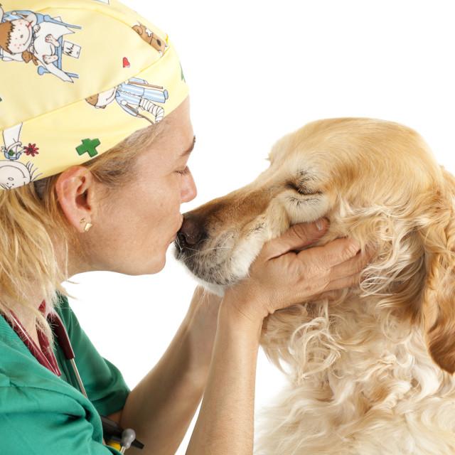 """Veterinary consultation"" stock image"