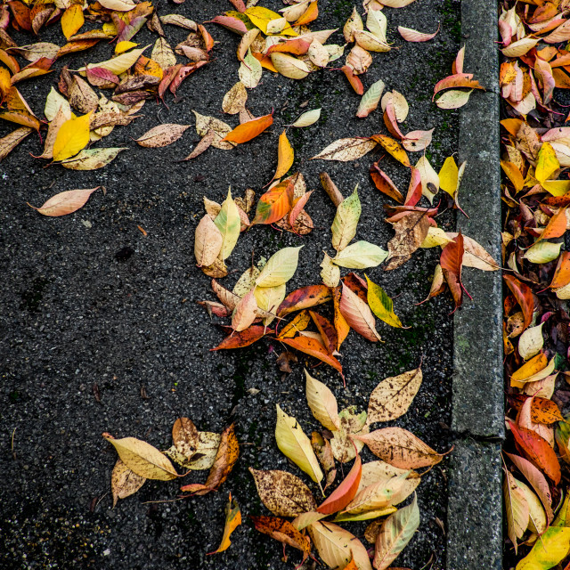 """""""A path of Autumn leaves"""" stock image"""