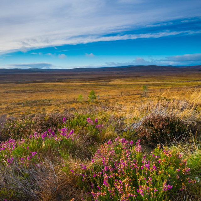 """Cairngorms looking north"" stock image"