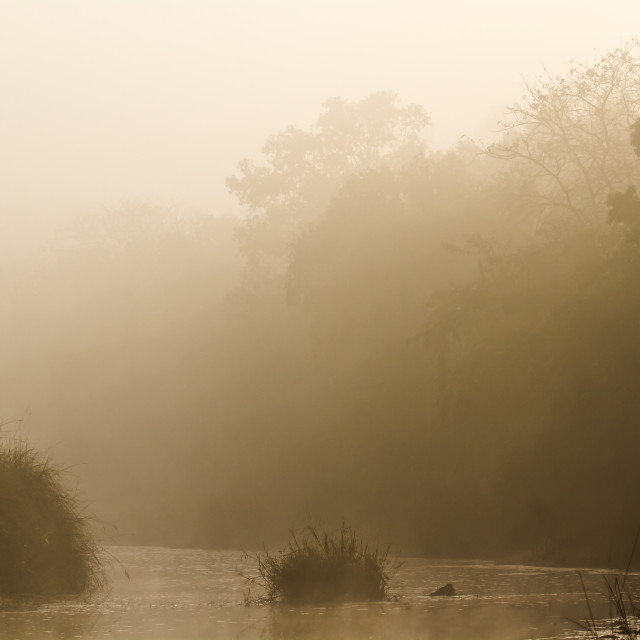 """Misty morning in jungle river in Nepal"" stock image"