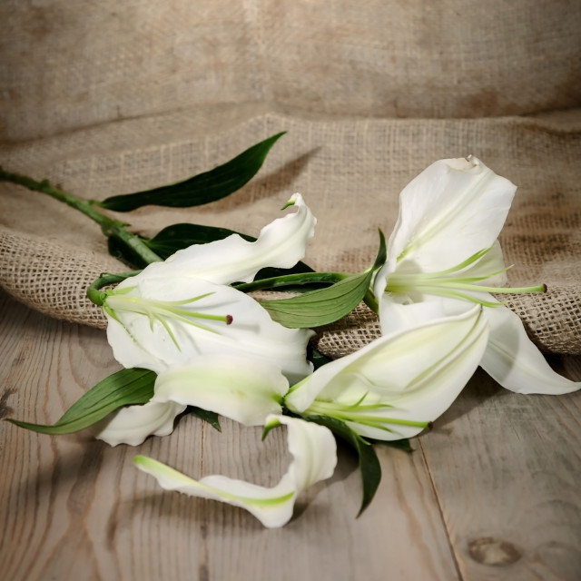 """white flowers"" stock image"