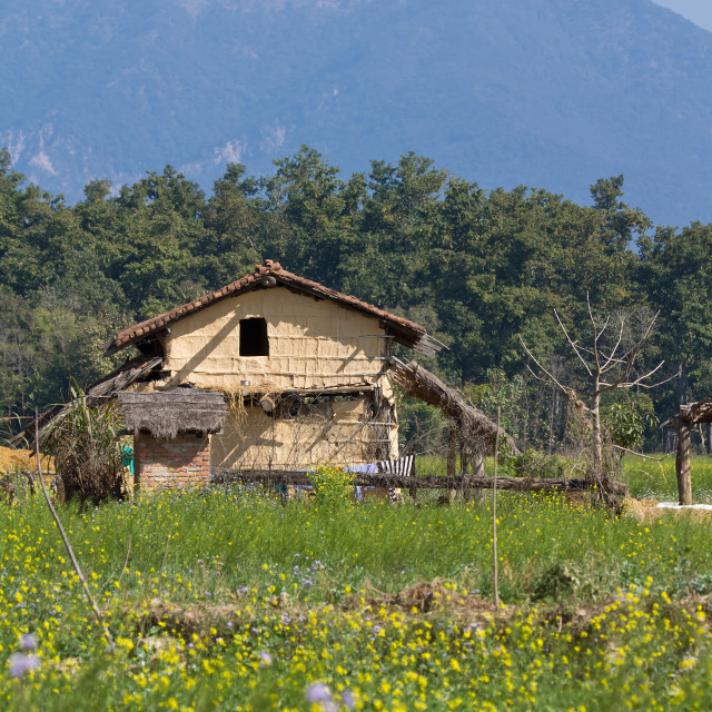"""Traditional taru house in Bardia, Nepal"" stock image"