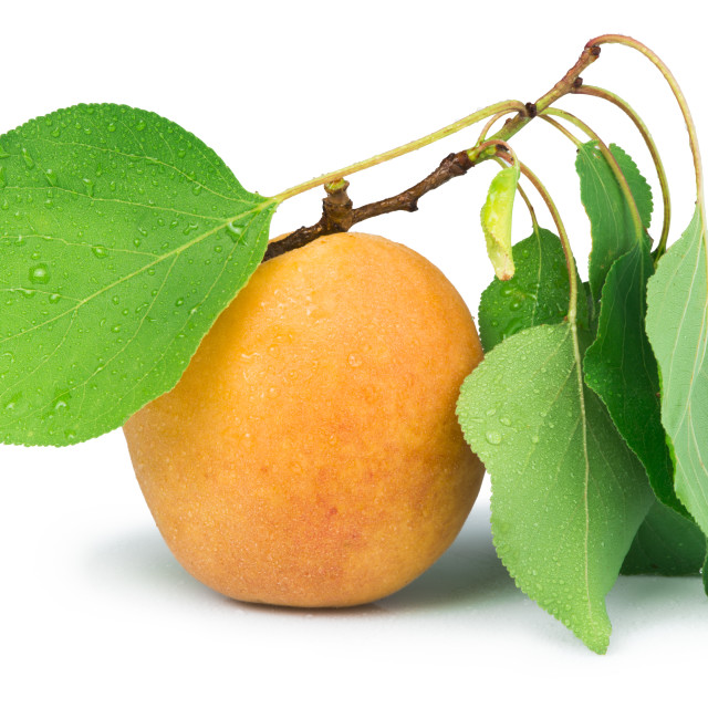 """""""Apricots and leaf white isolated"""" stock image"""