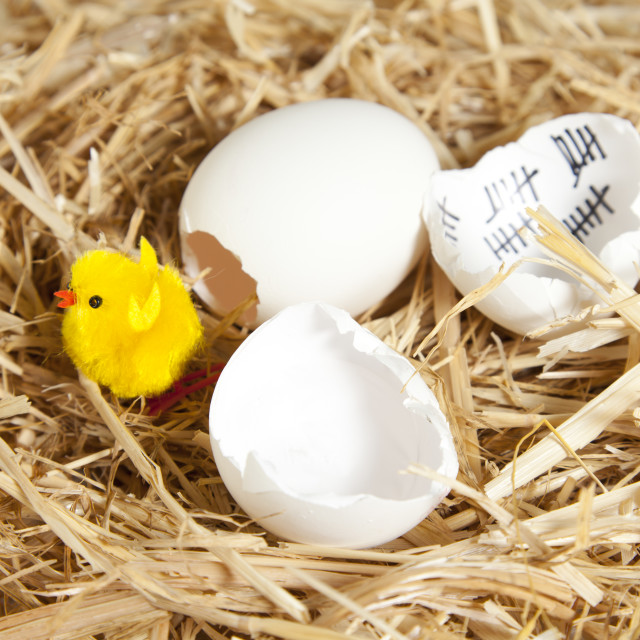 """Eggs in the nest"" stock image"