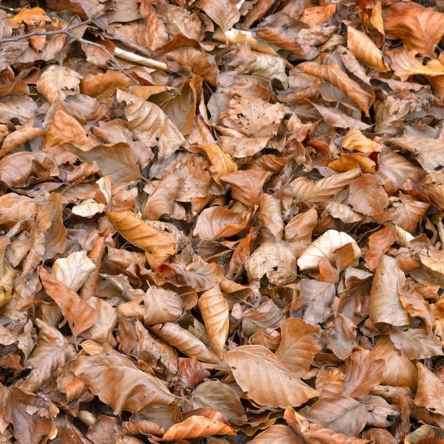 """Tree leaves dry"" stock image"